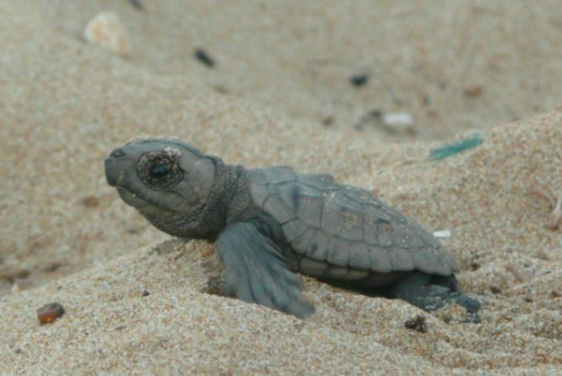 Five Amazing Places to Save Turtles for International Turtle Day